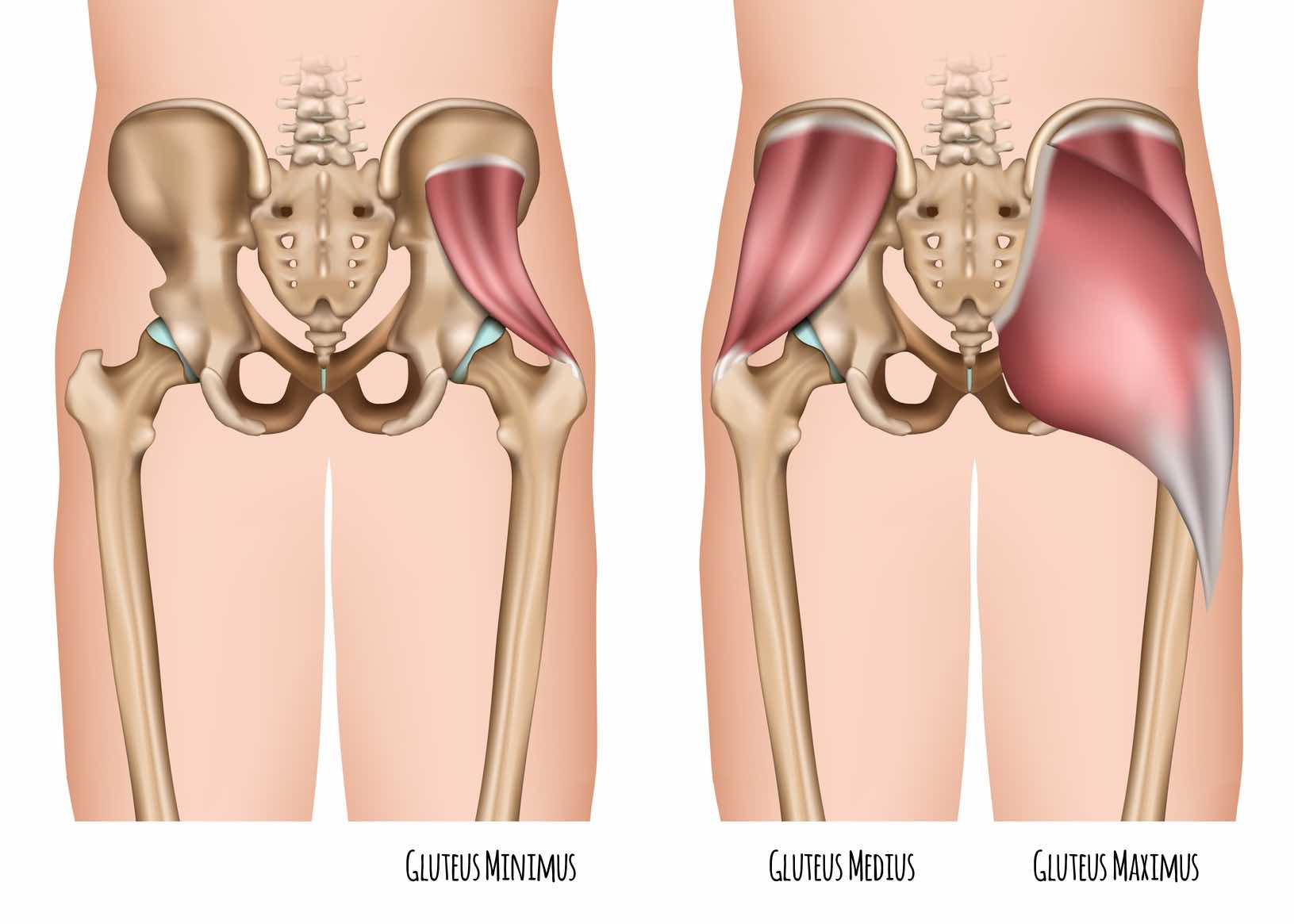 This Important Glute Muscle - The Gluteus Medius | Redefining Strength