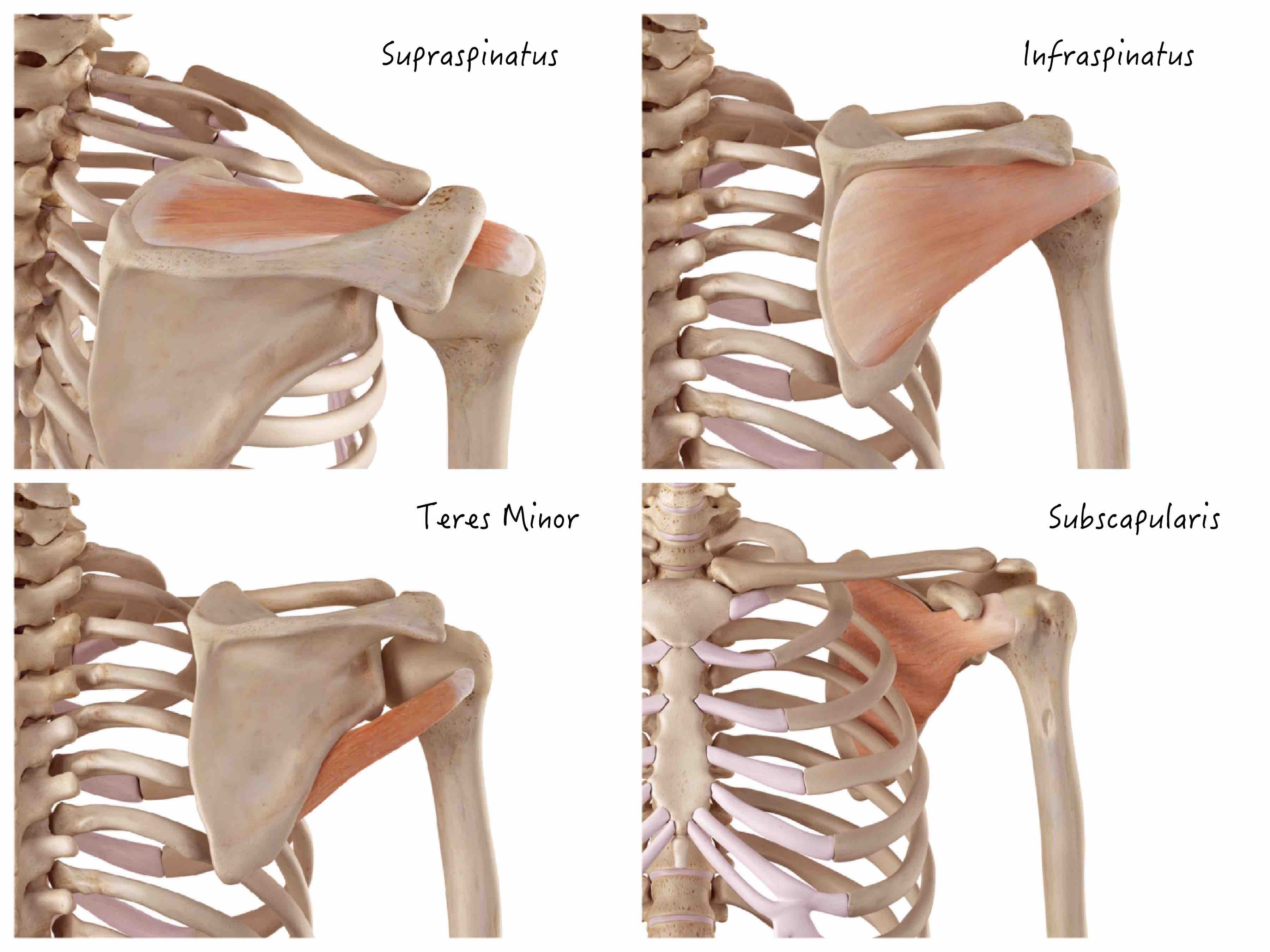 Stop Torturing Your Rotator Cuff!